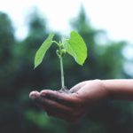 agriculture-growth-hand-1072824